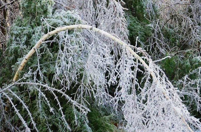 Jack Frost's Storm