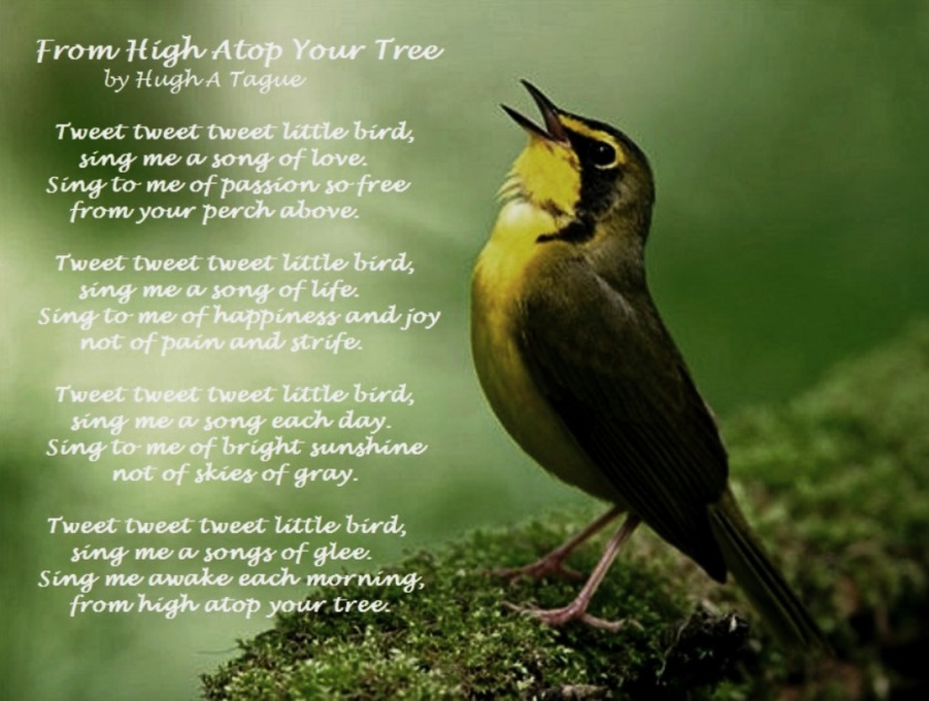 From High Atop Your Tree by Hugh A Tague